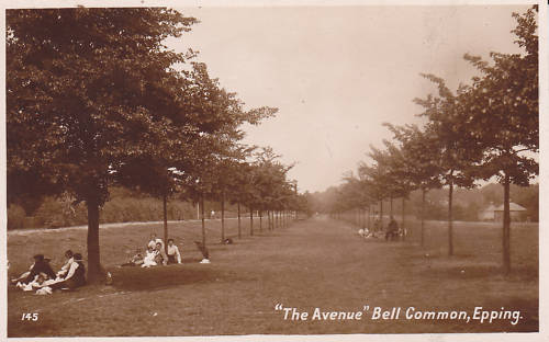 005 BELL COMMON AVENUE sepia