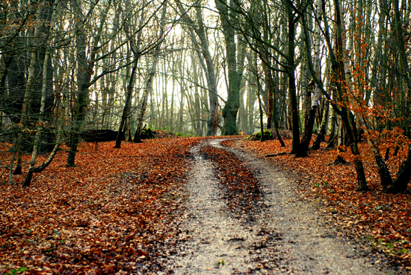 Upcoming walks in epping forest for Rainforest londra